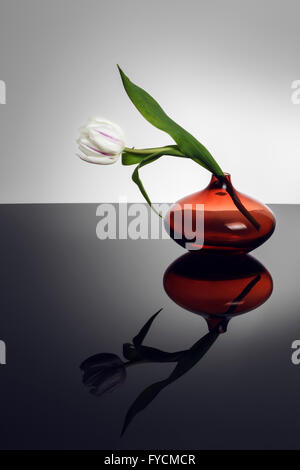 White Tulip in orange Glass Vase with Reflection - Stock Photo
