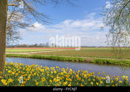 Spring time in The Netherlands: Flat countryside and view on flowering bulb fields from Keukenhof, in Lisse, South - Stock Photo