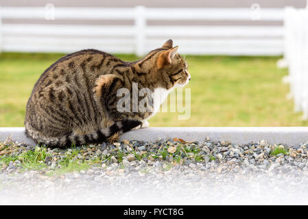 Farm cat keeping watch to greet visitors - Stock Photo