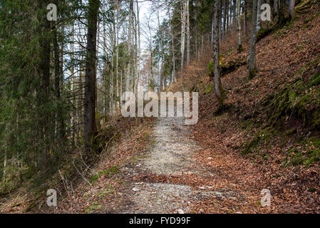 Pathway through the spring forest - Stock Photo