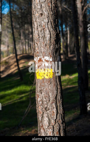 White and yellow marks of a Short Waymarked Path (PR) on the trunk of Aleppo Pine. Photo taken in Buendia, Cuenca, - Stock Photo