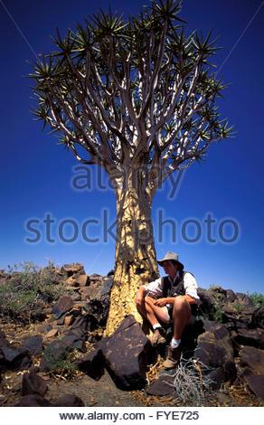 Aloe Dichotoma Quiver Trees Namibia - Stock Photo