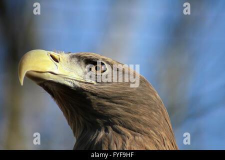 eagk - Stock Photo