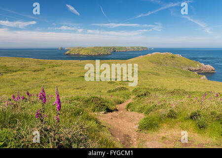 Deer Park near Martins Haven looking to Skomer - Pembrokeshire - Stock Photo