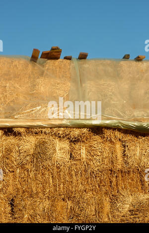 Straw pile covered with plastic film - Stock Photo