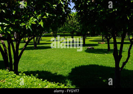 Citrus trees casting round shadows on the grass in the midday light - Stock Photo