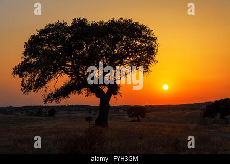 Single tree in a wheat field on a background of sunset - Stock Photo