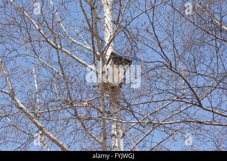 Birdhouse on a white birch tree on blue sky background. - Stock Photo