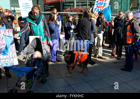 Bristol, UK. 27th April, 2016. Day 2. Rug the dog from Fishponds, supports the junior doctors strike in Bristol - Stock Photo