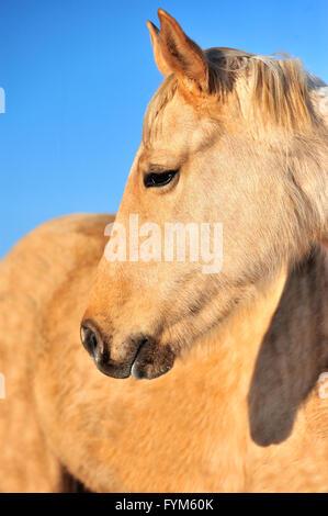 Closeup horse portrait on the sky background - Stock Photo