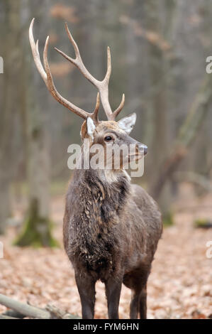 Beautiful young red deer in forest - Stock Photo