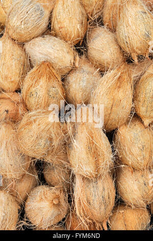 Many old brown coconuts on a pile - Stock Photo