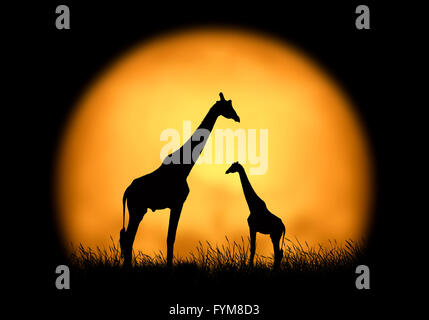Silhouette giraffe on the background of sunset. Large sun on a dark background - Stock Photo