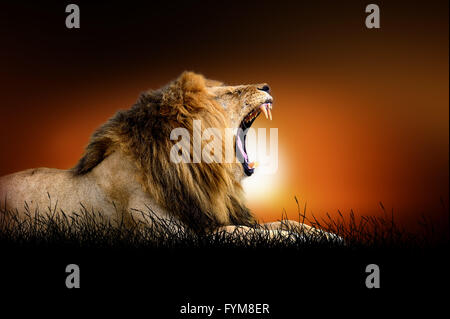 Lion against on the background of african sunset - Stock Photo