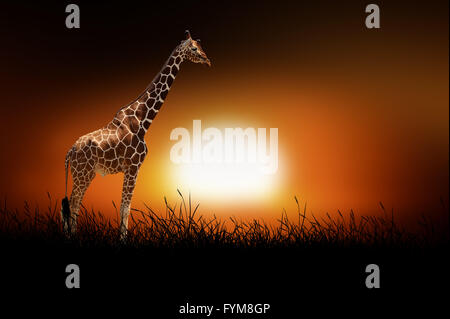 Giraffe against on the background of african sunset - Stock Photo
