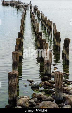 Wooden pier pillars, Puerto Natales, Patagonia, Chile - Stock Photo