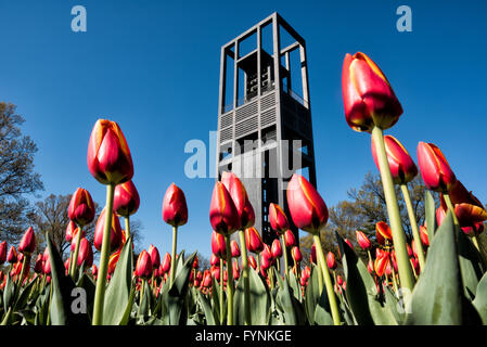 The Netherlands Carillon, a gift from the Netherlands to the United States in gratitude for assistance during World War II, stands in parkland near the Iwo Jima Memorial and Arlington National Cemetery. With 50 bells, it was installed in its current spot in 1960.