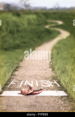 Snail going over the finish line, Concept - Stock Photo
