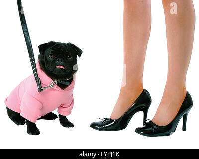 Small black pug puppy dog in pink clothes and woman in high heels isolated on white background  Model Release: Yes. - Stock Photo