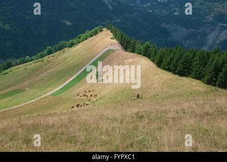 A herd of cows grazing on a slope of a mountain ridge in Albiez Montrond in France - Stock Photo