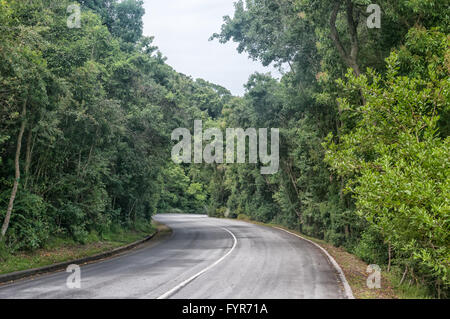 STORMS RIVER MOUTH, SOUTH AFRICA - MARCH 1, 2016:  The road through dense forest from the entrance gate to the rest - Stock Photo