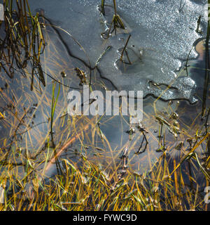 Melting ice on a pond in spring - Stock Photo