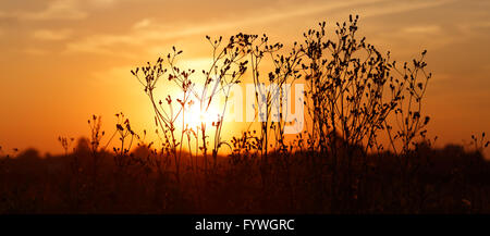 Sunset in countryside - Stock Photo