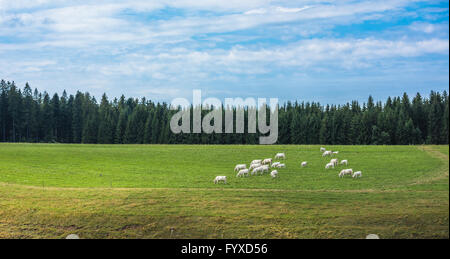 Cows in a green field - Stock Photo
