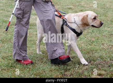 Blind person walking with her guide dog - Stock Photo