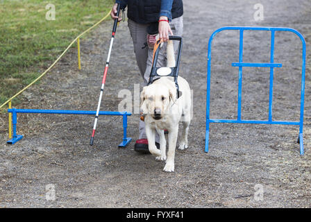 Blind person with her guide dog - Stock Photo