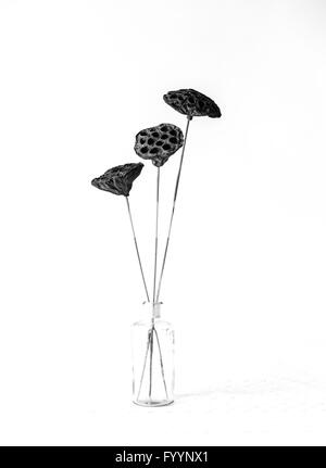 A monochrome image of 3 seed heads in a glass jar against a white background - Stock Photo