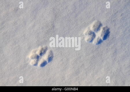 Animal tracks on snow background - Stock Photo