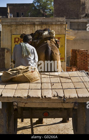 camel with trailer on a street, North India, India, Asia - Stock Photo