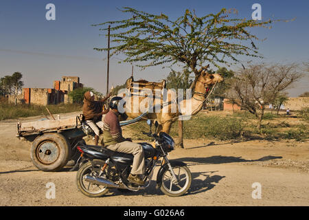 camel and a motorbike on a street, North India, India, Asia - Stock Photo