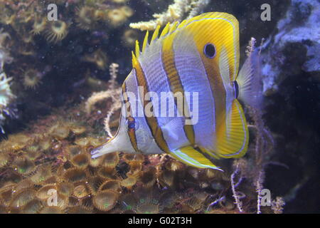 colorfull fish - Stock Photo
