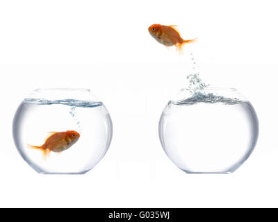Jumping golden fish I - Stock Photo