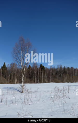 Sunny day in early spring at meadow near forest - Stock Photo