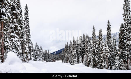 The wonders of snow covered trees in a snow packed winter landscape at Sun Peaks Alpine Village and ski resort in - Stock Photo