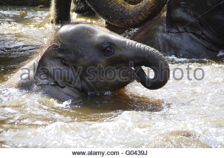 Elaphant calf - Stock Photo