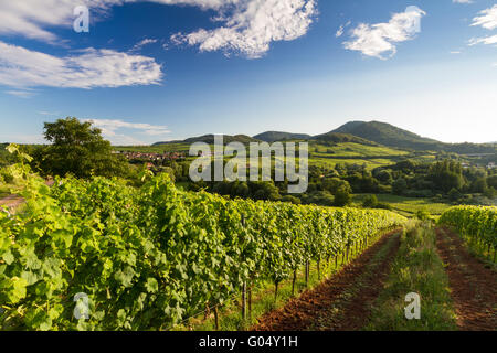 Vineyard and hilly landscape in Pfalz, Germany - Stock Photo