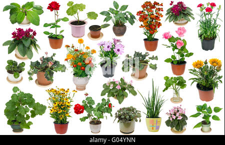 real fresh houseplants and indoor flowers in ceramic and plastic pots big set isolated on