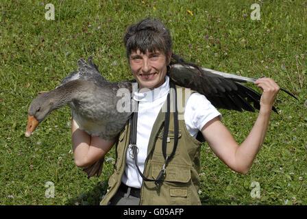 Pomeranian Goose - Stock Photo