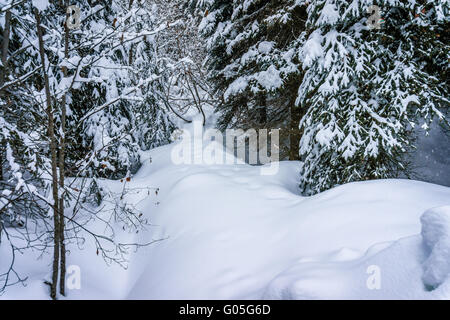 The wonders of a winter landscape with snow covered trees at Sun Peaks Alpine village in the Shuswap Highlands in - Stock Photo