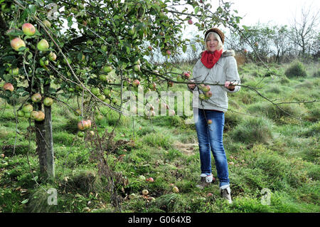 Woman on the orchard in autumn - Stock Photo