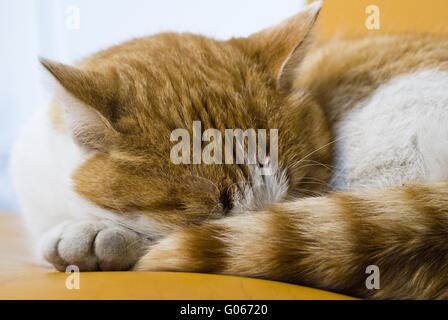 To cat in the deep sleep - Stock Photo