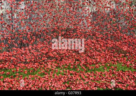 Cascade of ceramic poppies in the moat of the Tower of London, commerating 100th anniversery of World War One. London, - Stock Photo