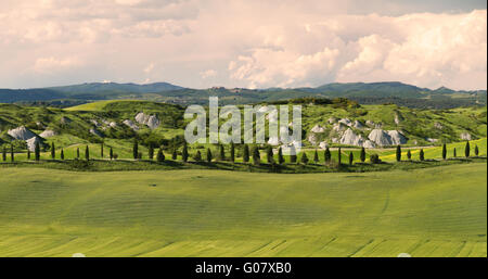 Alley with cypress trees near Siena, Crete Senesi, - Stock Photo