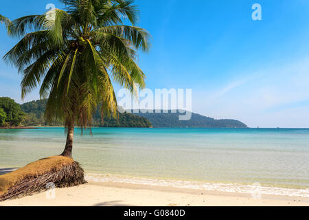 Beautiful palm tree on a tropical island beach - Stock Photo