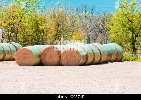 Harvested hay bales on farm - Stock Photo