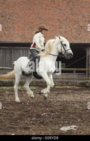 Girl on back of Connemarapony, gallop - Stock Photo